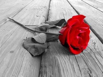 rose-rod
